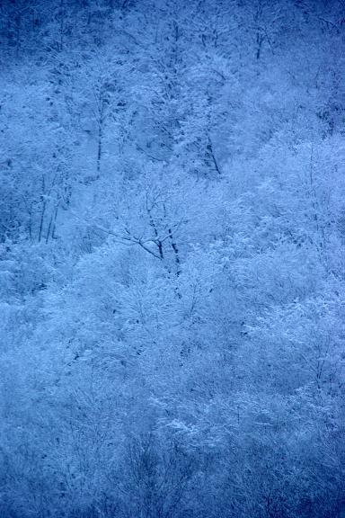 画像 寒い雪山の木々